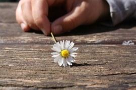 daisy-75190__180